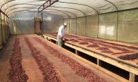 8_Fermentazione_di_cacao.jpg